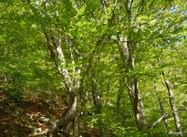 le bois de Patriques