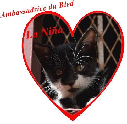 Chat-du-bled_La-Nina-ambassadrice-01.jpg