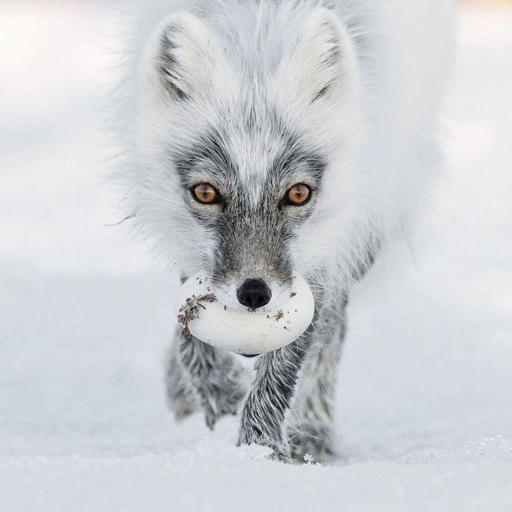 1. Trésor Arctique — Sergey Gorshkov, Russie