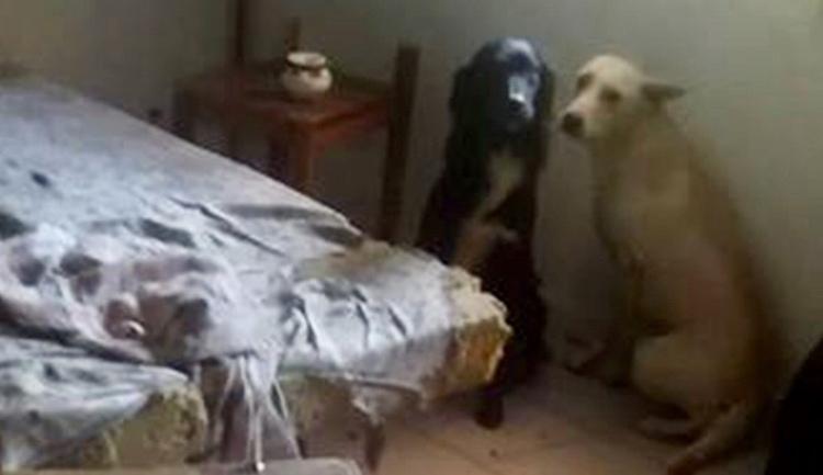 2 chiens et un chat sauvés dans un appartement insalubre