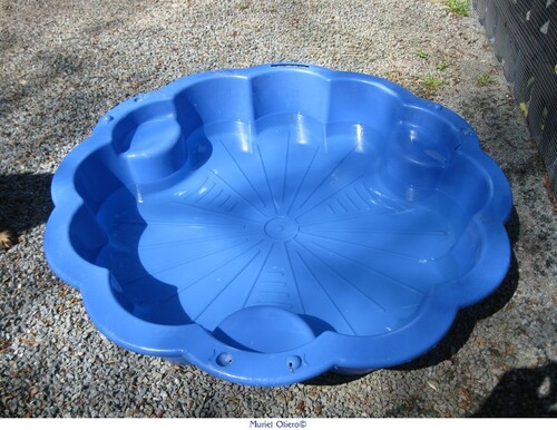 Cocker's piscine
