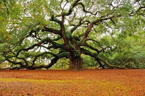 arbre_majestueux.jpg