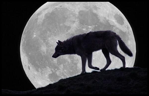 Coeur de Loup