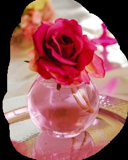 Belle comme une rose de printemps....