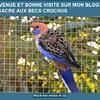 mes oiseaux 56