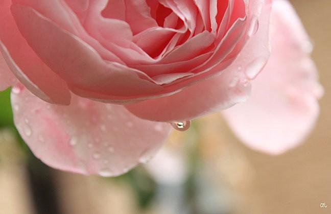 macros-fleurs 4747