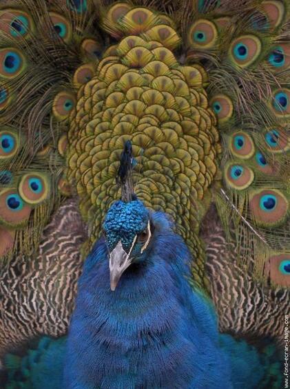 Accéder au Sacré pour Être un bon ĒL-ÈVE de l'Univers ... Langue des oiseaux !