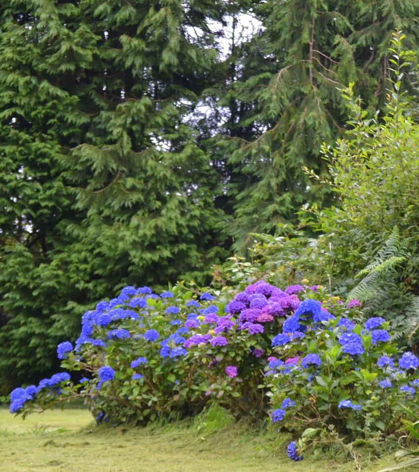 du bleu  de l 'été