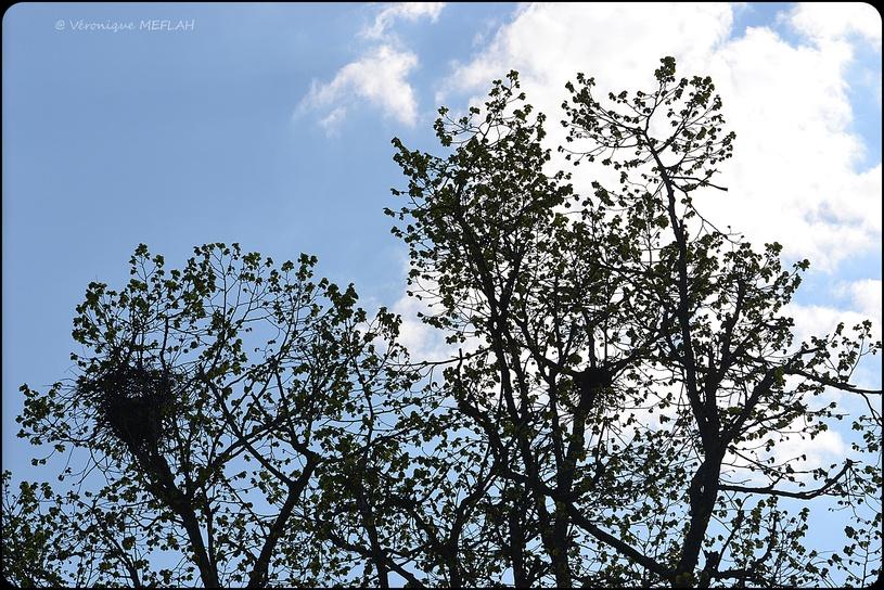 Rambouillet : Auprès de mon arbre