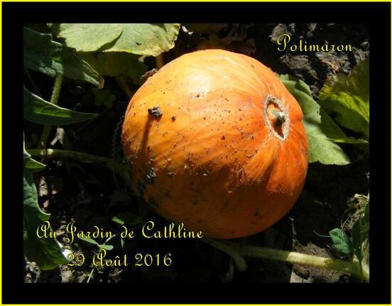 Jardiner avec la Lune du 1er au 10 septembre