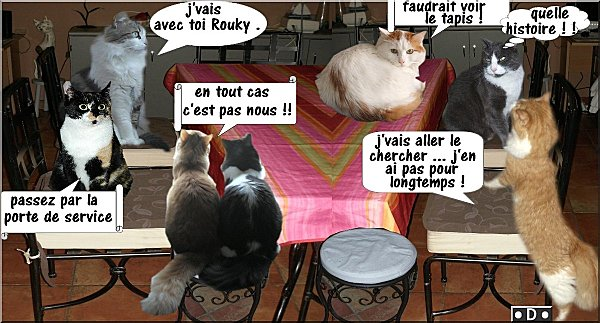 table-et-chats.jpg