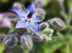 Le goût des fleurs !!!