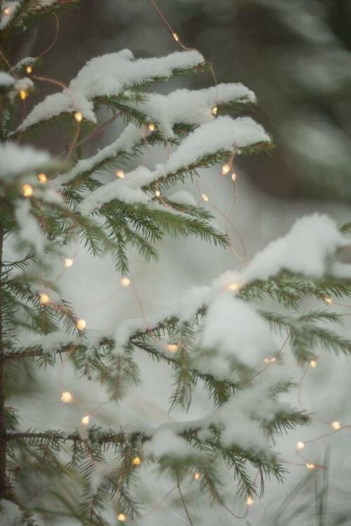 """yellowrose543:""""Christmas"""""""