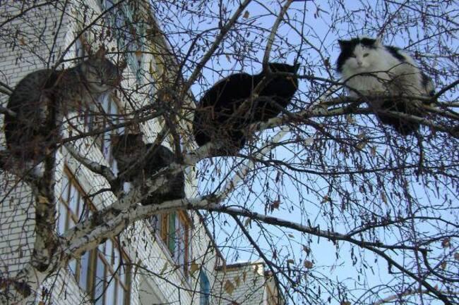 Photos de chats