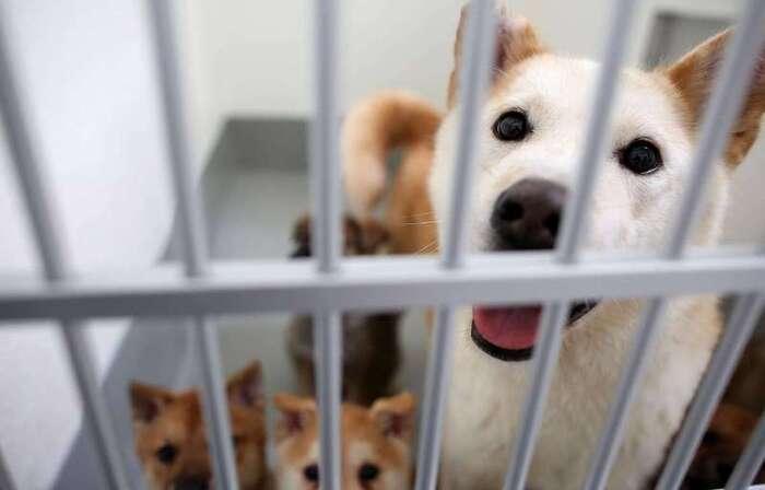 Laval: Critiquée, la vente aux enchères de 250 chiens finalement annulée