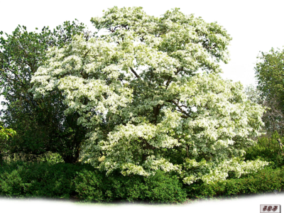 Tubes : Nature/arbres