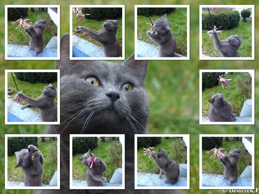 Une jolie carte et instants de jeux avec le chat