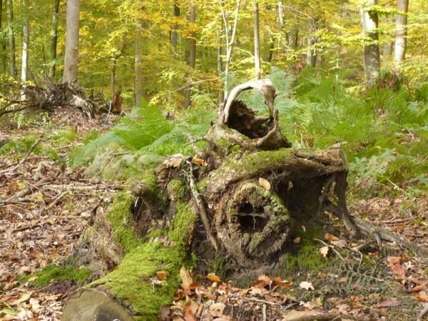 Souche-Fontainebleau1