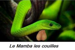 Le Mamba