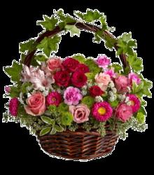 PNG-Virág képek