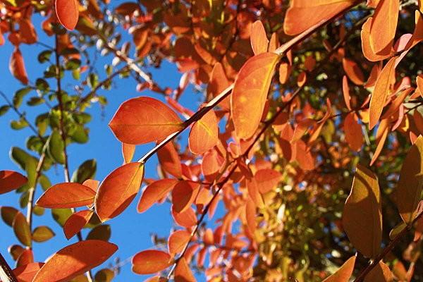 automne-2011 5671