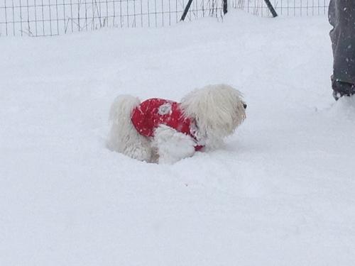Beaucoup de neige dans le Gard (30)!