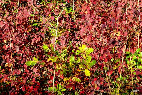 Automne: feuilles