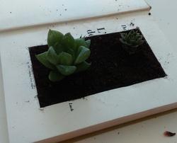 Tuto : Mon mini jardin