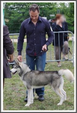 Thyron à l'exposition canine de L'Union (juin 2011)
