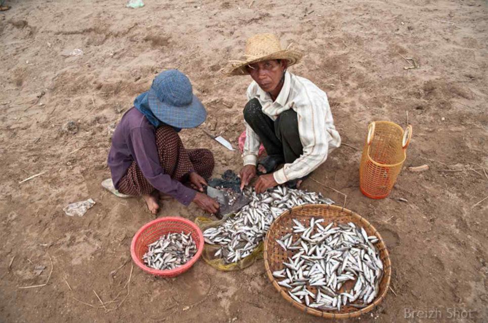Marché aux poissons de Kampong Cham