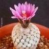 capcactus