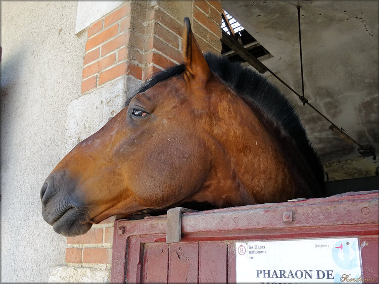 Photos des chevaux au box (haras de la Vendée)
