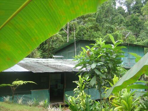 La maison d'Alfredo, perdue dans la forêt.