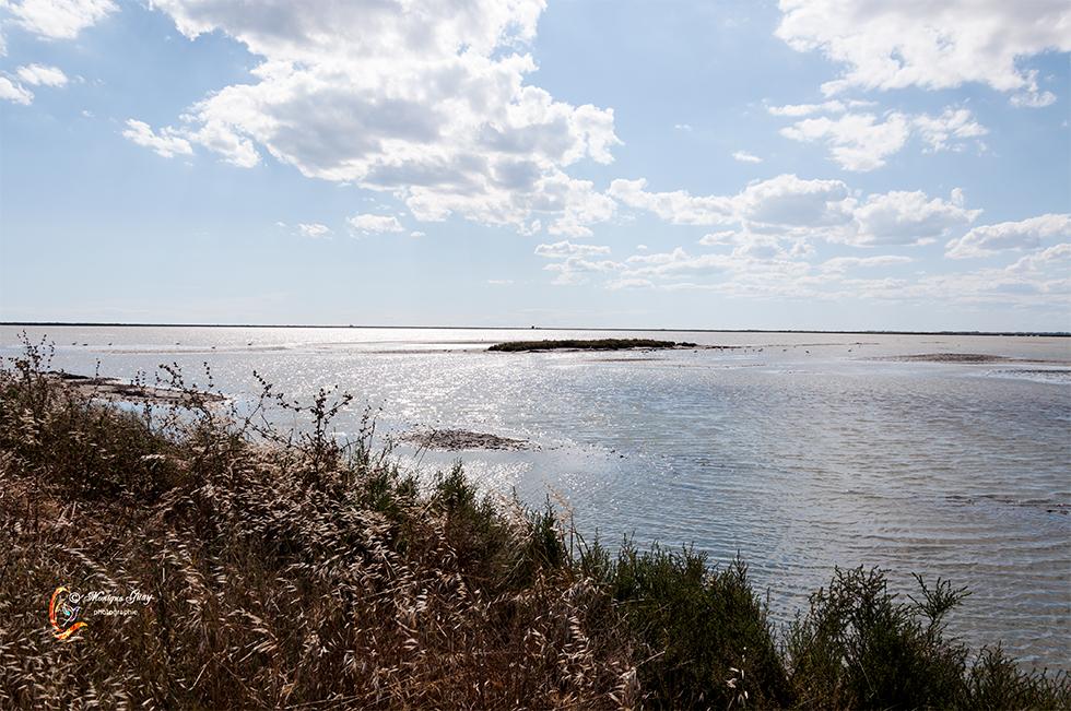 Delta de la Camargue argenté