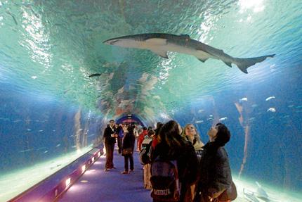 Le projet d'aquarium de Casablanca est confirmé