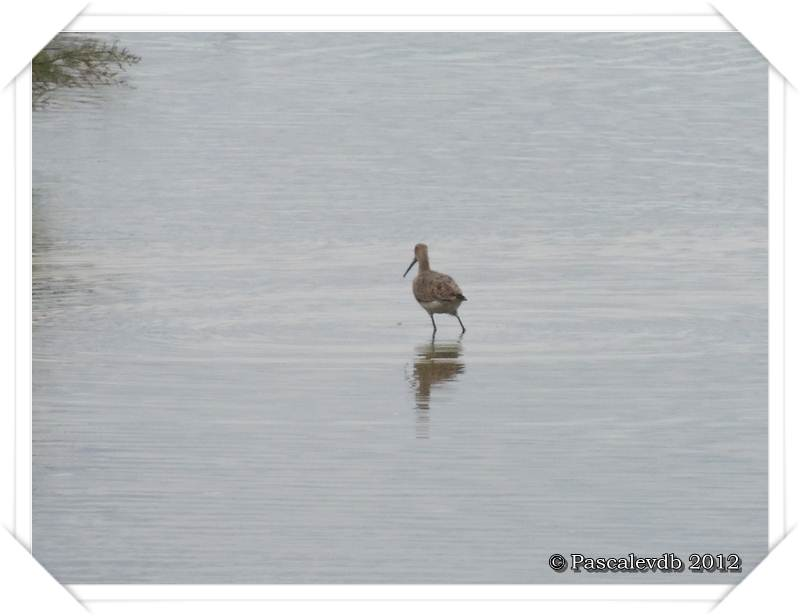 Visite à la réserve ornithologique du Teich - 6/8