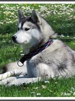 Jaïka (16 mois)
