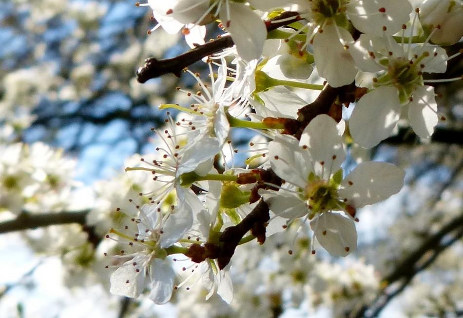 Quel beau mois d'avril !