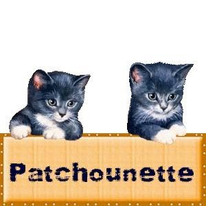 Patchounette chats gris foncé et blanc