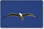 Galerie Oiseaux