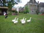 Sortie scolaire au château du Blanc Buisson