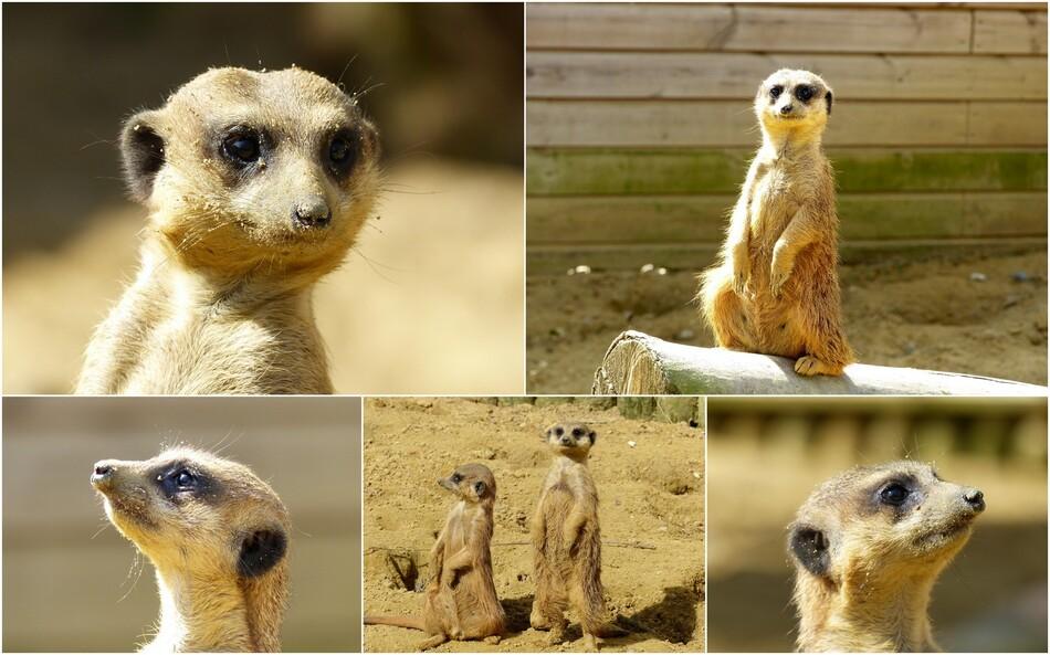 Les habitants du Zoo