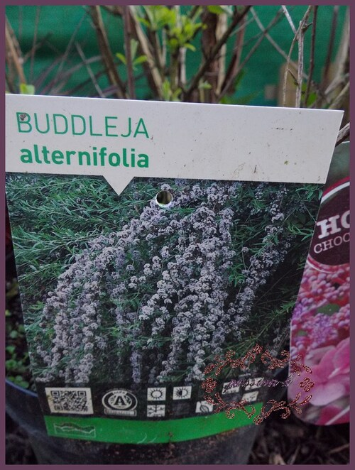 des plantes a gogo