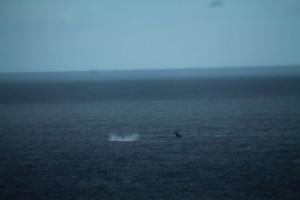 baleine-2886.JPG