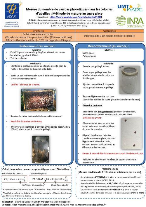 Mesure du nombre de varroas phorétiques dans les colonies d'abeilles : Méthode de mesure au sucre glace