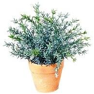 pot-de-romarin-herbes-de-provence-.jpg