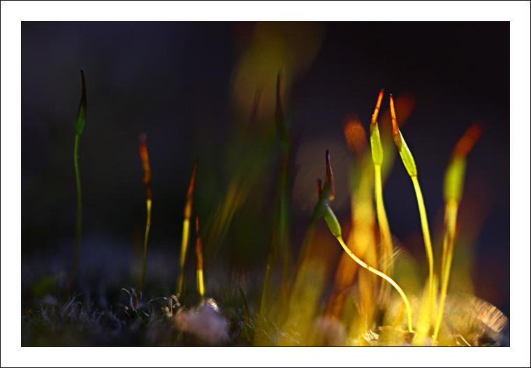 Mousses au soleil couchant