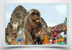 Le banquet des singes