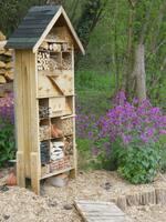 Hôtel à insectes. Les abeilles solitaires