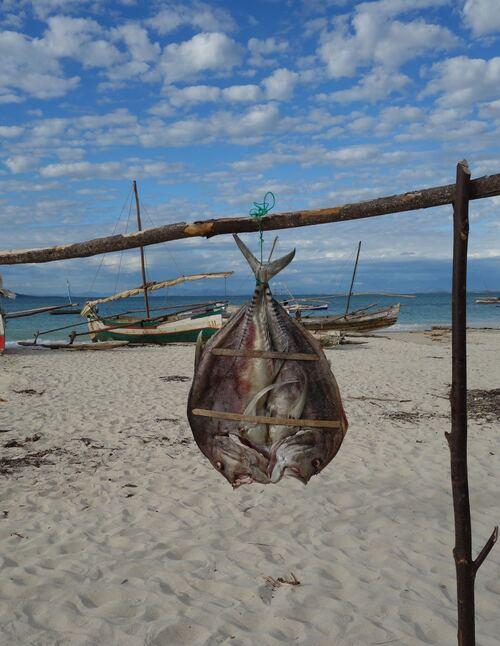 2 juillet au 13 juillet: Madagascar, deuxième partie